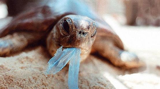 Plástico: O vilão dos oceanos