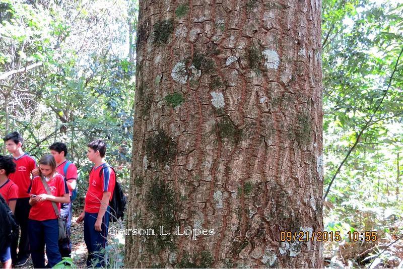 Pimenta-de-macaco-9